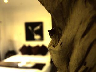 ロゴ/写真:Cocooning Hotel