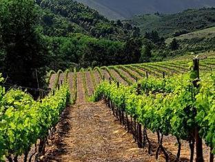 Knorhoek Country Guesthouse Stellenbosch - Vineyards