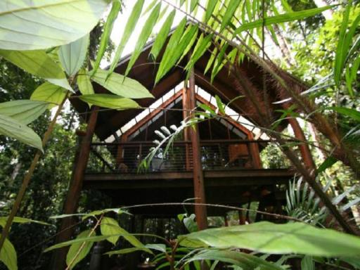 The Canopy Rainforest Treehouses PayPal Hotel Atherton Tablelands