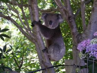 Adelaide Hills Bed & Breakfast Accommodation Adelaide - A Koala visit in the garden