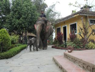 Hotel Sapana Village Lodge Chitwan Чітван - Сад