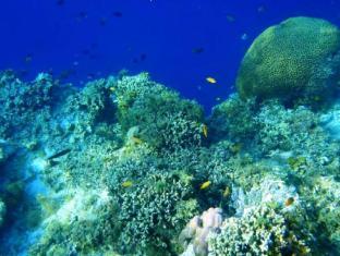 Panglao Kalikasan Dive Resort Bohol - Attrazioni nelle vicinanze