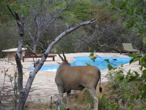 Best PayPal Hotel in ➦ Otavi: Gabus Game Ranch Hotel