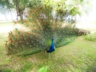 Sibu Island Resort Mersing - SIR Peacock
