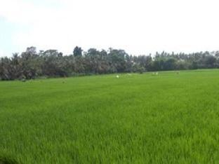 Banjar Apuh, Lodtunduh