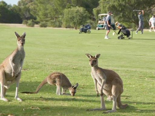 Best guest rating in Yanchep ➦  takes PayPal