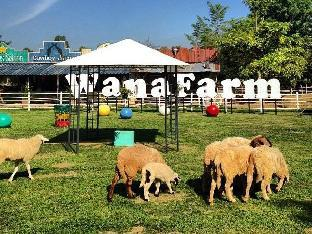 Wana Horse and Ostrich Farm Tent PayPal Hotel Chiang Rai