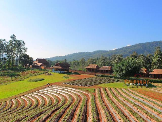 ดอยนก สตรอเบอรี รีสอร์ต – Doi Nok Strawberry Resort