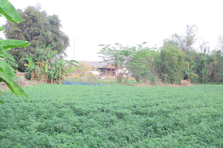 Pavida Residence