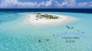 Island-Pavilion