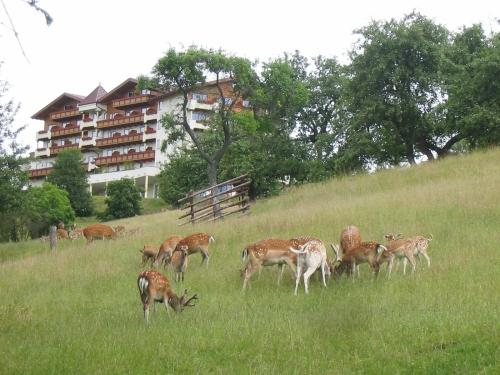 Natur  Und Wohlfuhlhotel Kastenholz