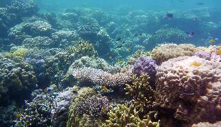 picture 4 of Sandingan Island Dive Resort