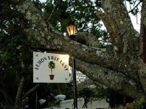 Lemon Tree Lane Guest House