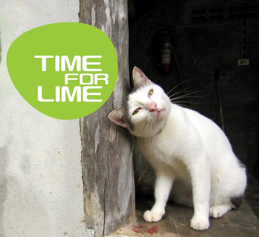 Time For Lime ไทม์ ฟอร์ ไลม์