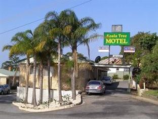 Koala Tree Motel