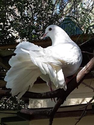 The Dove Cote