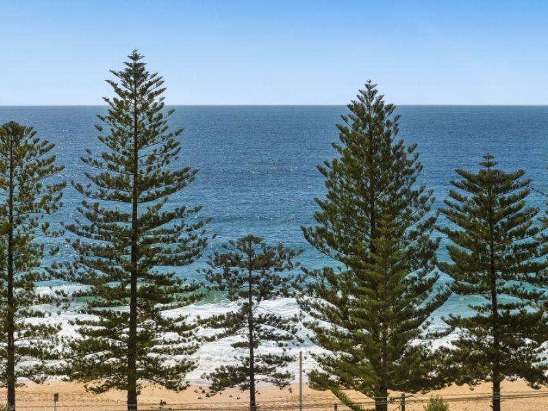 Bliss At Whale Beach   Whale Beach