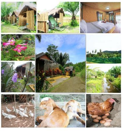 YaoIsland Resort and Farm Phuket