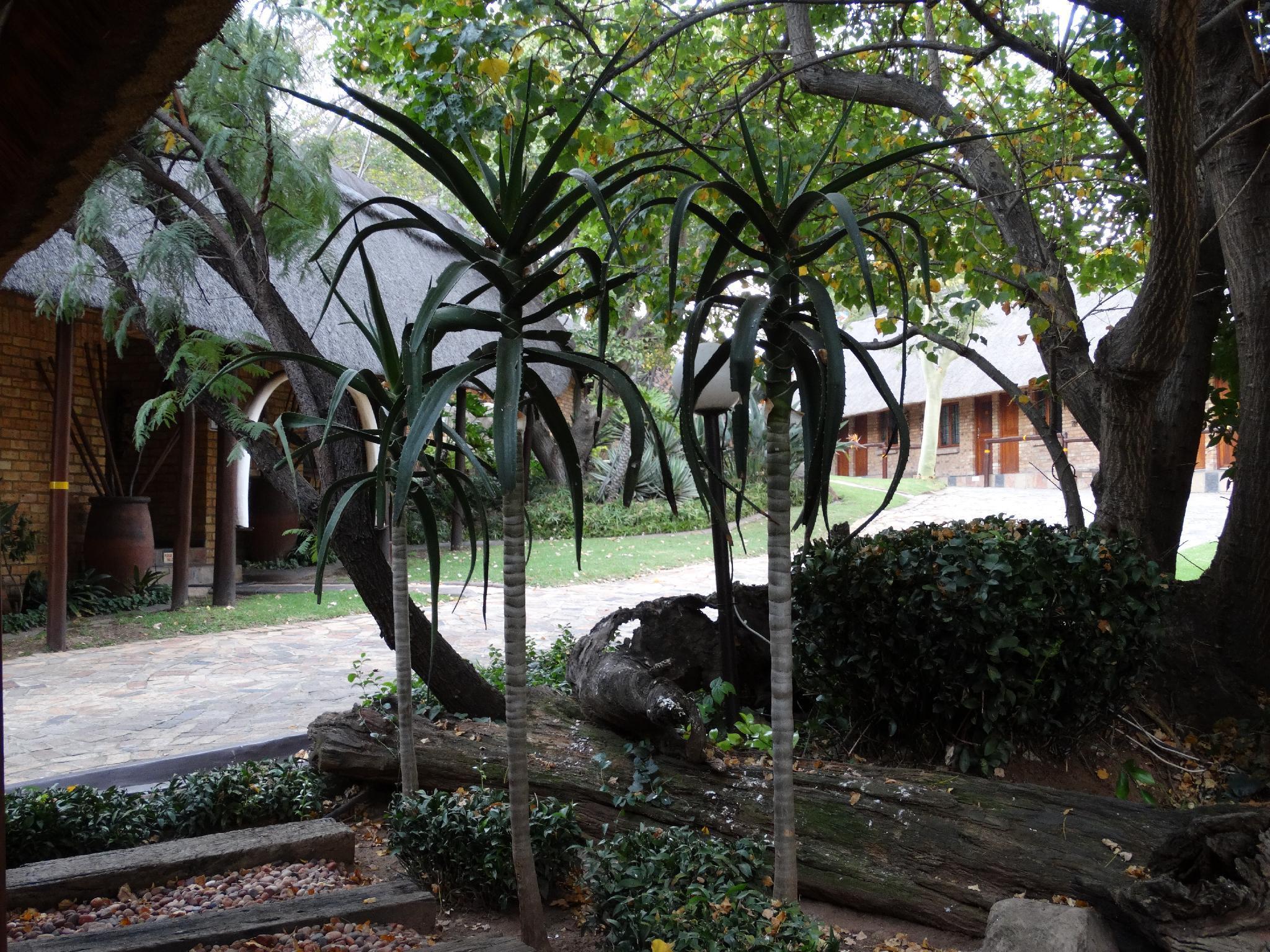 Klein Bosveld Gastehuis
