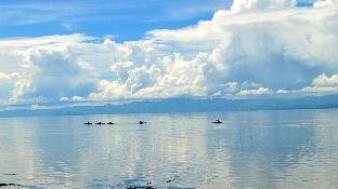 picture 4 of Alegria Dive Resort