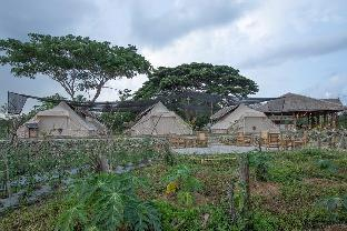 picture 4 of The Acacia Glamping Park