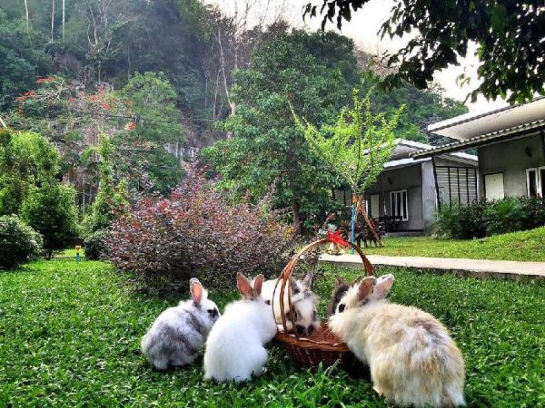 V Valley Resort Satun