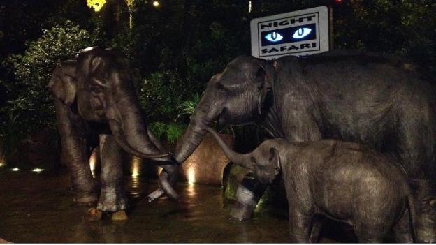 Night Safari - TICKETS ONLY