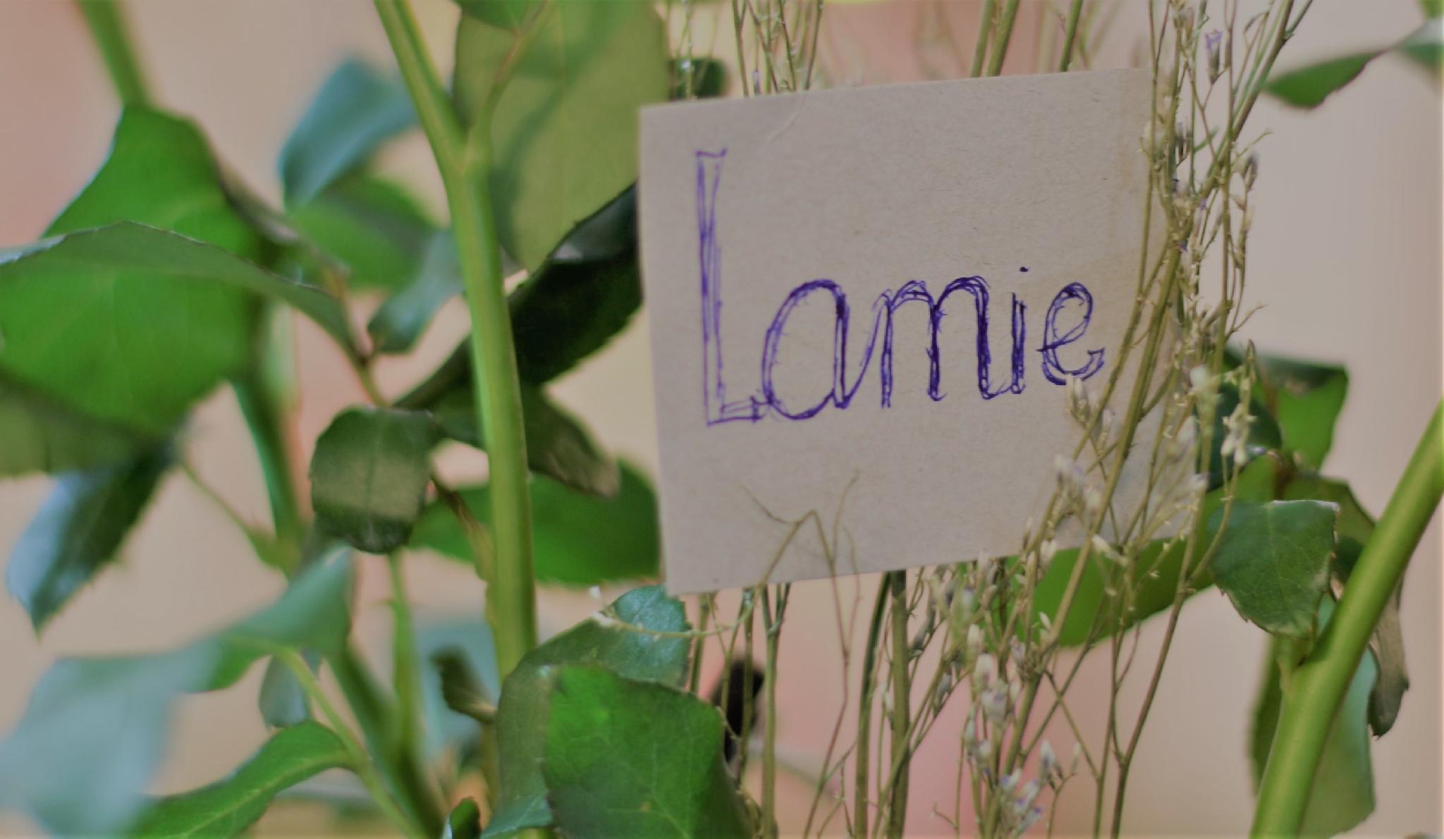 Lamie House
