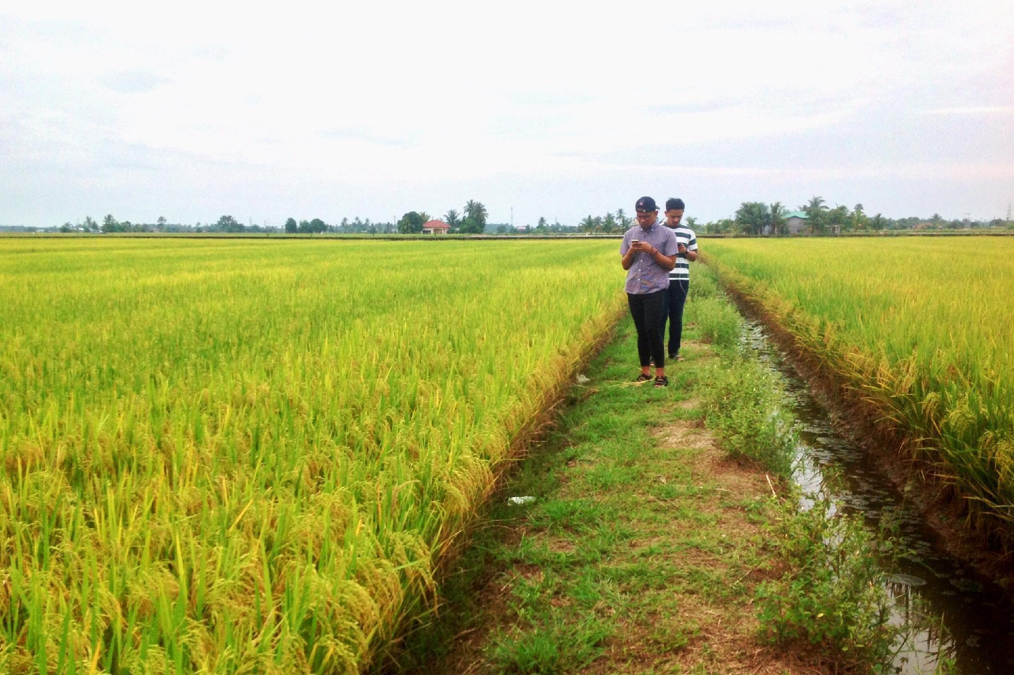 Dorani Retreat  Discover Life In Malay Village