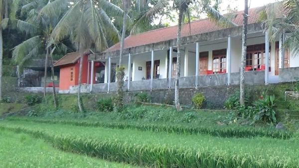 Lotus Guesthouse Sudaji Bali