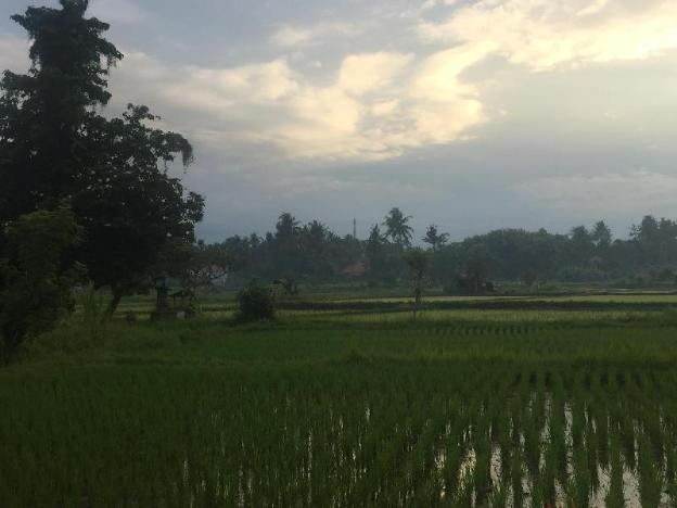 Small paradise near the ricefields