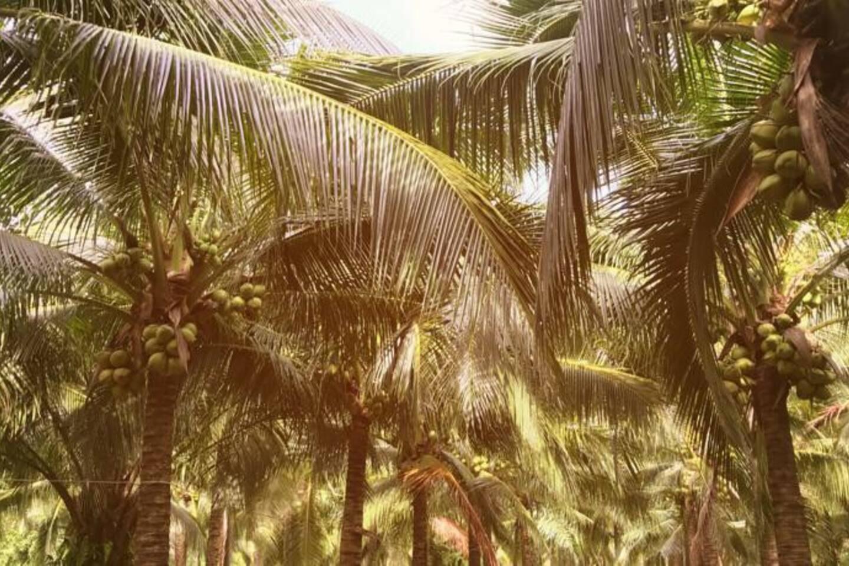 Garden Coconut Nature House Air Con1